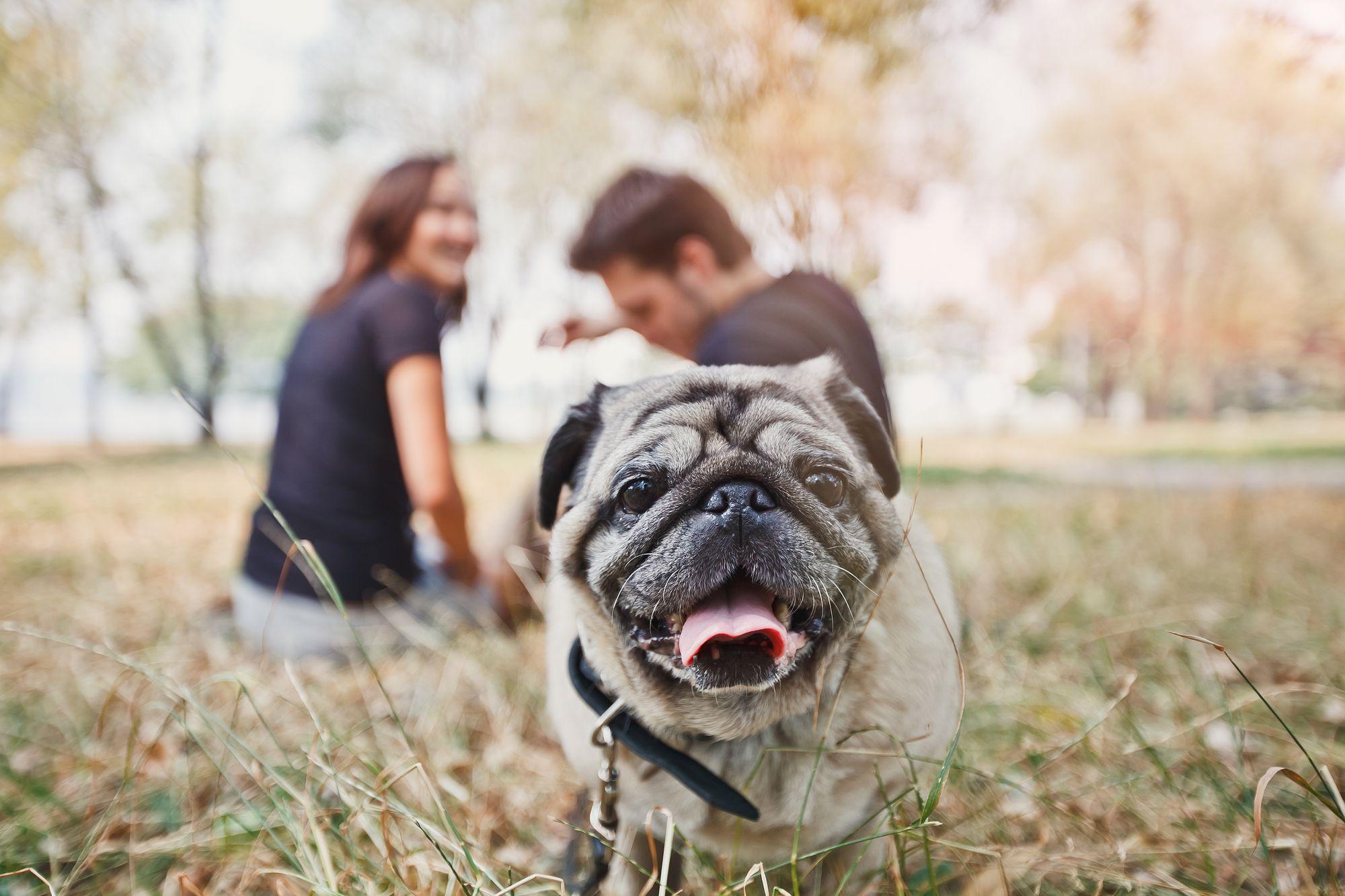 Aprenda como abrir um pet shop online seguindo esses 5 passos